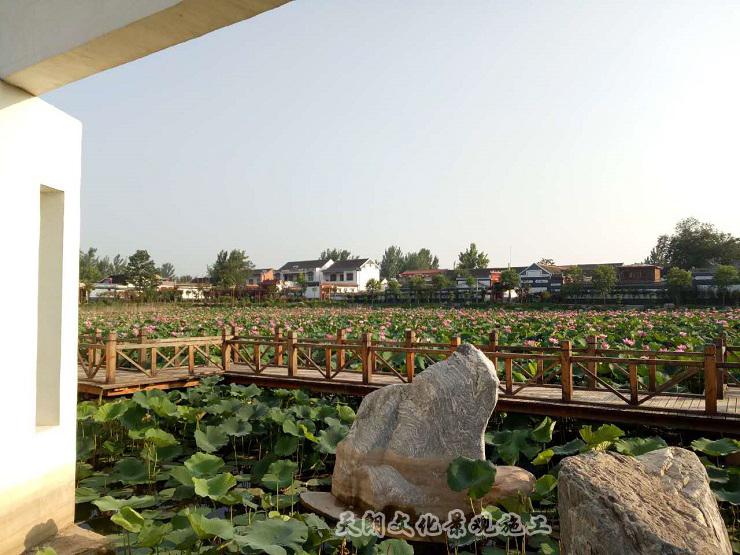 赵堤镇观荷台2
